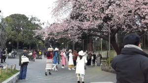 women-cherry-tree
