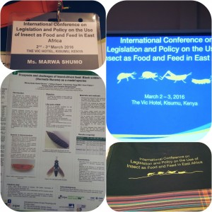 Marwa and her flies attending the conference